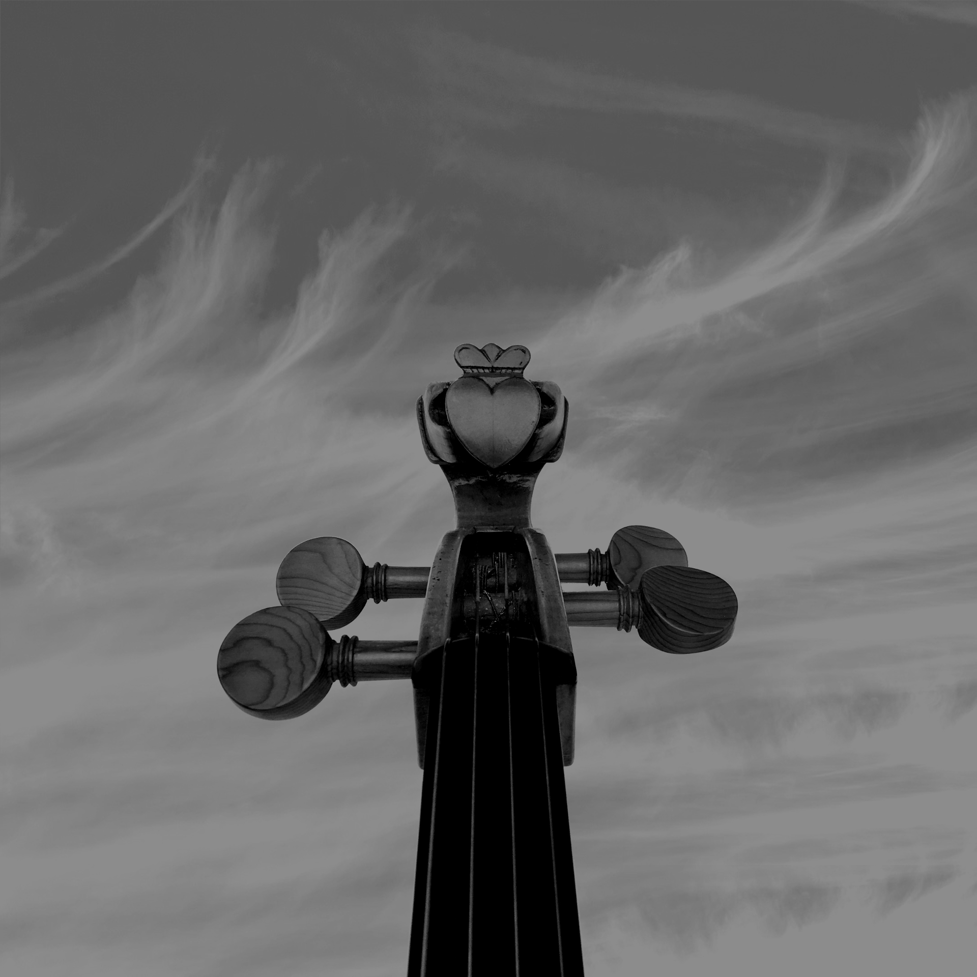 The Galway Cello Scroll photograph black and white